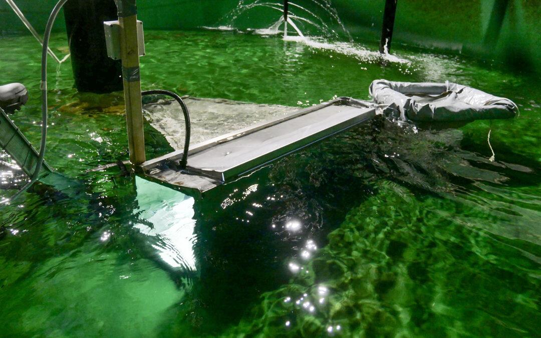 Automatisk fjerning av uønsket fisk i elv